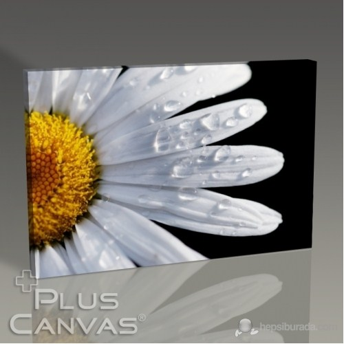 Pluscanvas - Closeup Daisy Tablo