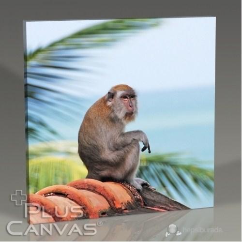 Pluscanvas - Oktay Toygar - Malezia - Monkey Iı Tablo