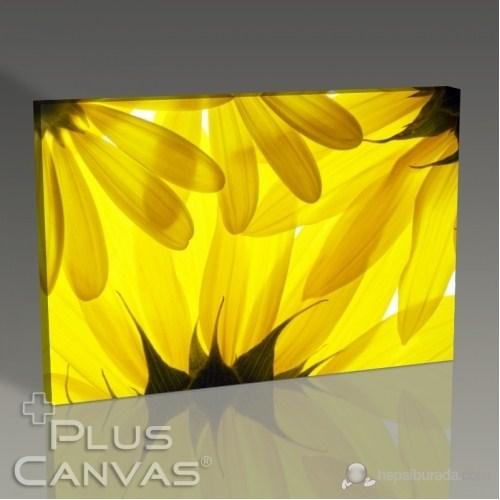Pluscanvas - Yellow Daisy Tablo