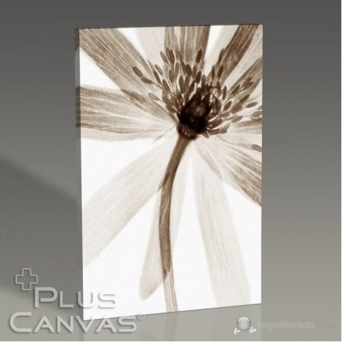 Pluscanvas - Celeste Iı Tablo