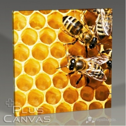 Pluscanvas - Bees On Honeycomb Tablo