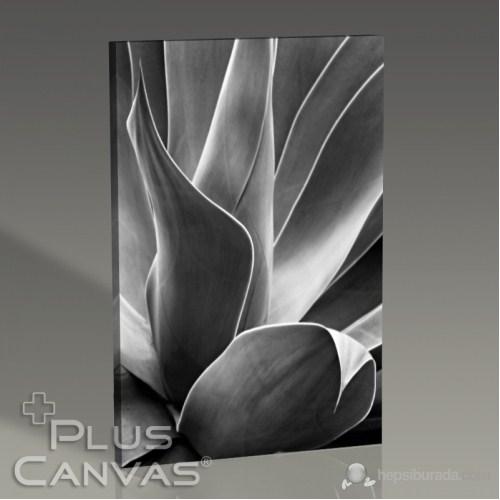 Pluscanvas - Flora I Tablo