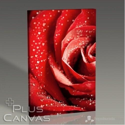 Pluscanvas - Red Rose Close Up Tablo