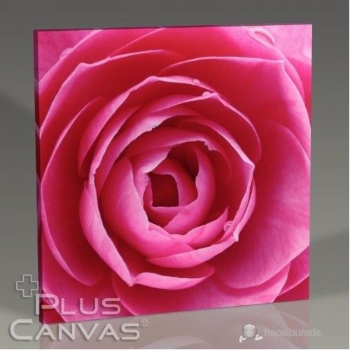 Pluscanvas - Pink Rose Tablo