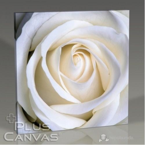 Pluscanvas - White Rose Tablo