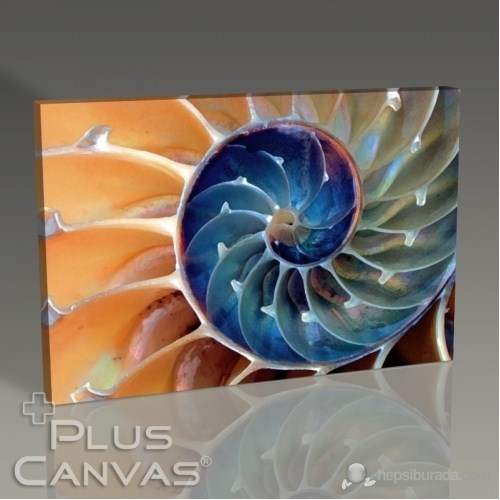 Pluscanvas - Nautilus I Tablo