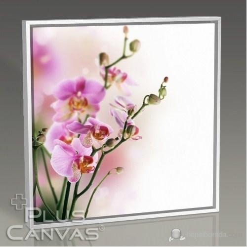 Pluscanvas - Orkide Tablo
