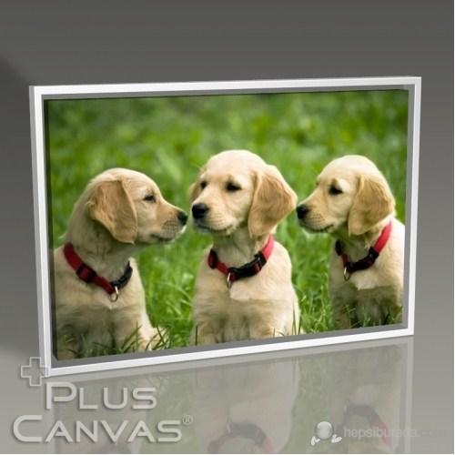 Pluscanvas - Three Dogs Tablo