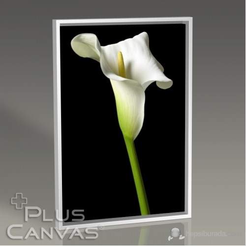 Pluscanvas - Cella Lilly On Black Tablo