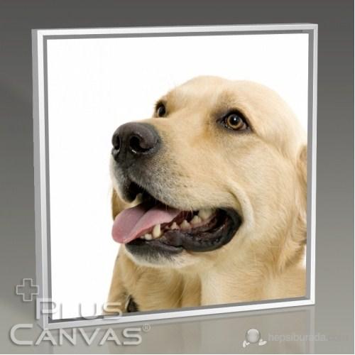 Pluscanvas - Labrador Tablo
