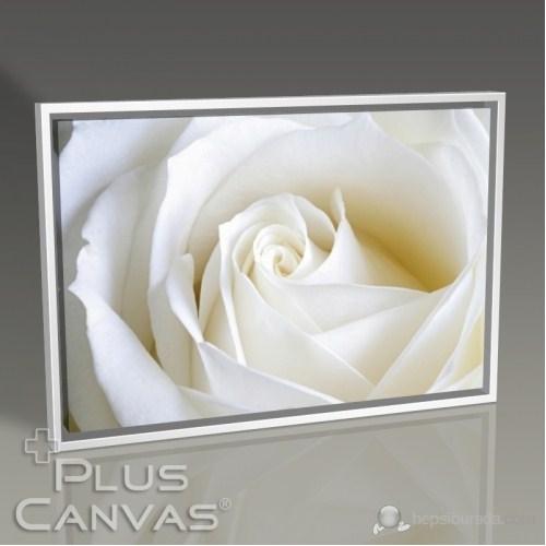 Pluscanvas - White Rose Close Up Tablo