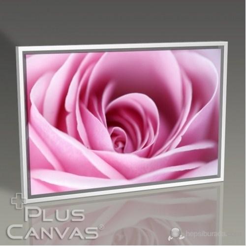 Pluscanvas - Closeup Pink Rose Tablo