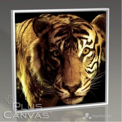 Pluscanvas - Closeup Tiger Tablo