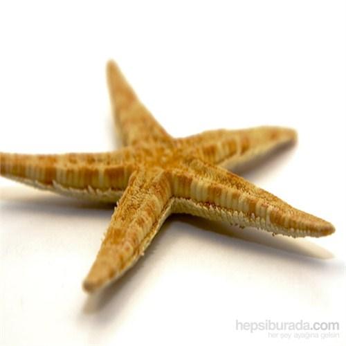 """Deniz Yıldızı 3""""-4"""" (20'Li Paket)"""