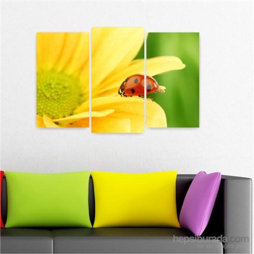 Dekoriza Uğur Böceği & Sarı Papatya 3 Parçalı Kanvas Tablo 80X50cm