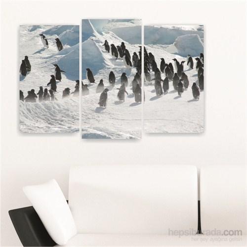 Dekoriza Penguenler 3 Parçalı Kanvas Tablo 80X50cm