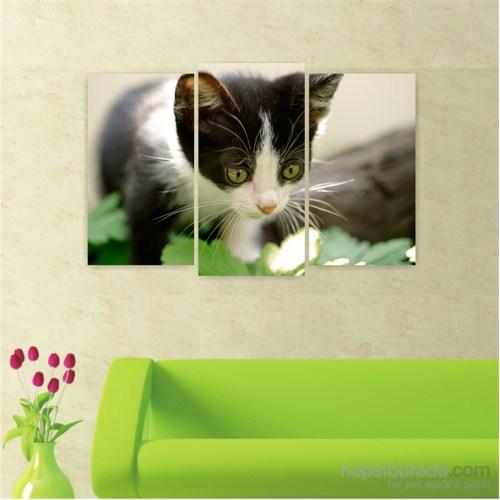 Dekoriza Kedi 3 Parçalı Kanvas Tablo 80X50cm