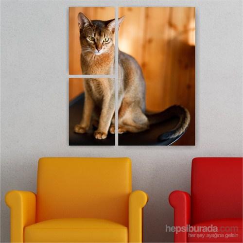 Dekoriza Kedi 3 Parçalı Kanvas Tablo 72X90cm