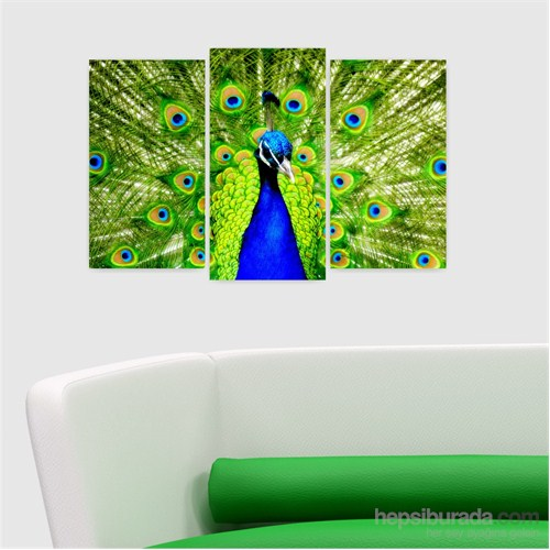 Dekoriza Tavuz Kuşu 3 Parçalı Kanvas Tablo 80X50cm