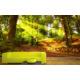 Artmodel 3D Orman Manzaralı Poster Duvar Kağıdı PDM-18