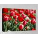 Kanvas Tablo - Çiçek Resimleri - C196