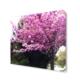 Dekor Sevgisi Erguvan Ağacı ve Çiçeği Tablosu 40x40 cm