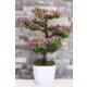 Yapay Çiçek Deposu Yapay Küçük Çınar Ağacı Çiçekli Model
