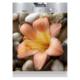 Çiçek Beyaz Eşya Sticker BUL009
