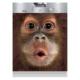 Maymun Beyaz Eşya Sticker BUL112