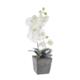 LoveQ Orkide Saksıda Extra 45 Cm