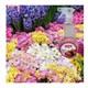 Oto Parfümü 500Ml Çiçek Bahçesi Carpi