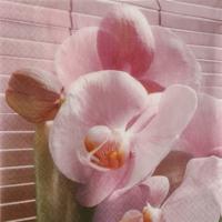 Hobi24 Dekupaj Peçete - Asia Orchid 211135