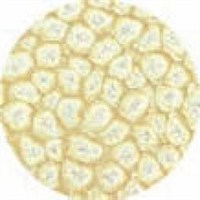 Pebeo Fantasy Prisme Efekt Boyası 20 Eggshell White