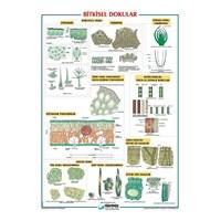 Bitkisel Dokular Levhası