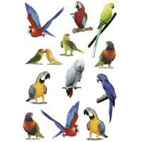Herma Çocuk Etiketleri Renkli Papağanlar