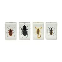 Celestron 44407 3D Böcek Örneği Seti 1