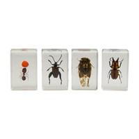 Celestron 44409 3D Böcek Örneği Seti 3