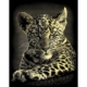 Reeves Kazıma Seti - Scraperfoil Gold - Leopard