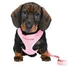 Trixie Yavru Köpek GöğüsTasma&Kyış,23-34Cm/2M/10Mm