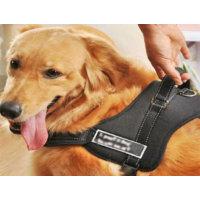 Toptancı Kapında Köpek Sırt Tasması Sports Dog