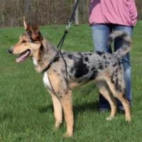 Trixie Easy Walk Köpek Kolay Yürüme Eğitim Tasması L 45-65 Cm 25 Mm