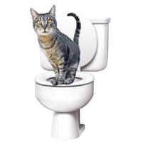 Citikitty Kedi Tuvalet Eğitim Seti