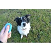 Pratik Dog Clicker Köpek Eğitim Aparatı