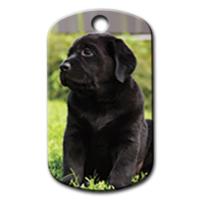 Dalis Pet Tag - Siyah Labrador Resimli Köpek Künyesi