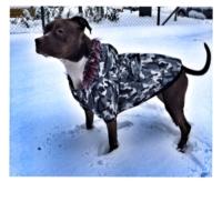 Kemique Büyük Irk - Kamuflaj- Poof By Kemique - Köpek MontuKöpek Paltosu - Köpek Kıyafeti