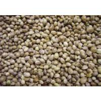 Yeşil Boncuk Kendir Tohumu 600 Gr