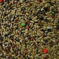 Sağlık Tarım Ürünleri Kanarya Yemi Karışık 10 Kg