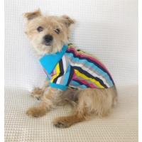 Kemique Mavi Gökkuşağı - Polo Yaka Tişört - Summer Köpek Elbisesi