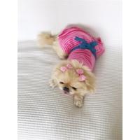 Kemique Pink Stripes Köpek Elbisesi - By Kemique - Köpek Kıyafeti