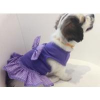 Dogi & Dog Mor Puantiyeli Köpek Elbisesi